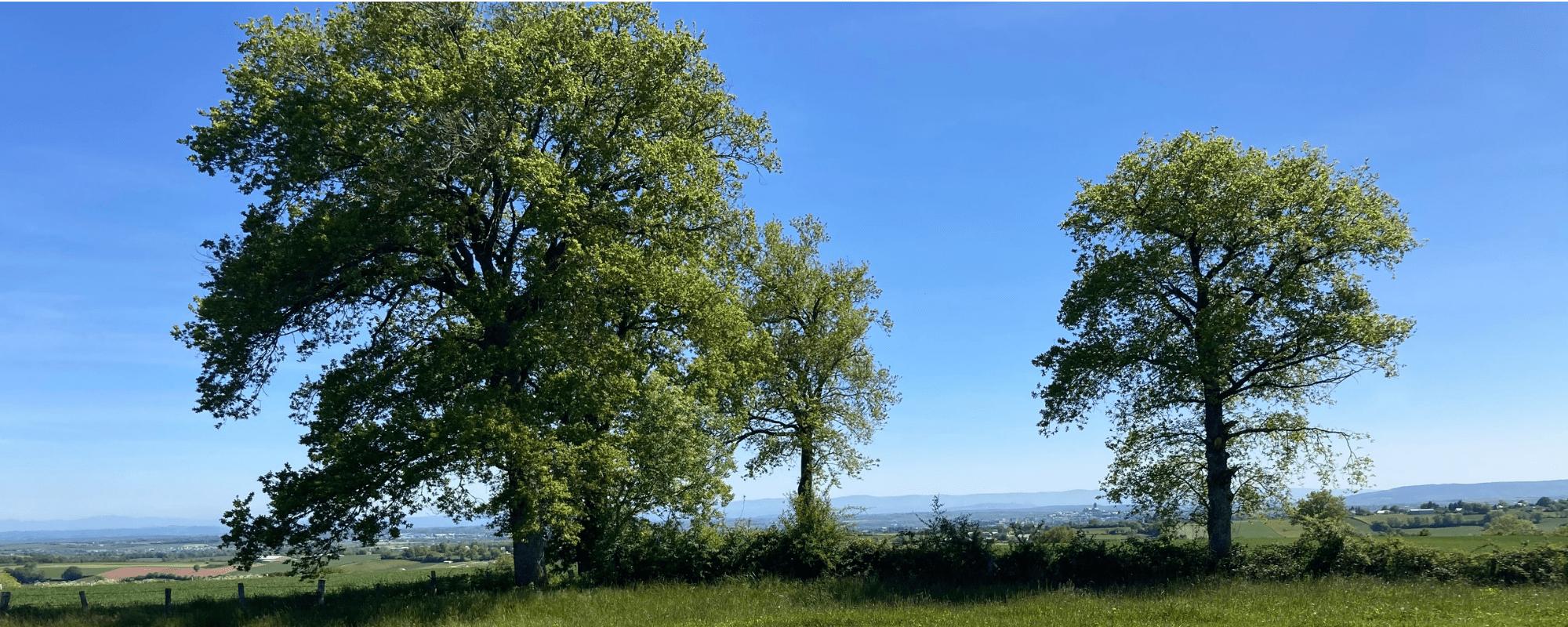 LAX - Hauts de Fourcade - GGL - Rodez - 1